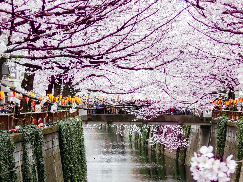 Nakameand Daikanyama Walking Tour Tokyo Japan