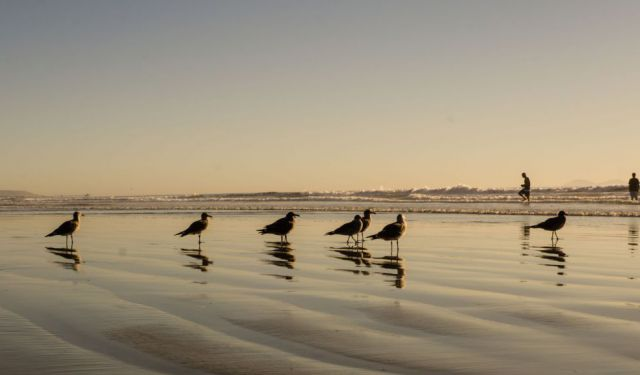 12 Reasons Why You Need to Visit Coronado the Crown City