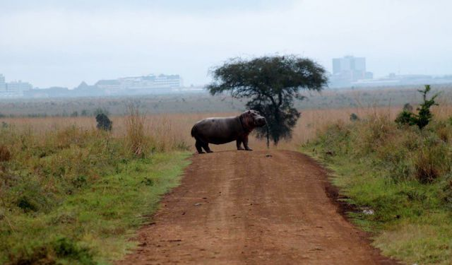For the Love of the Wild in Nairobi