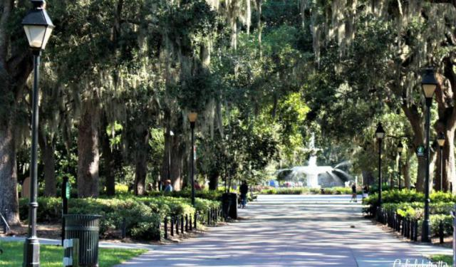 A Busy Bee's Guide to Savannah, Georgia