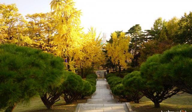 Best of Seoul's Parks and Gardens in Autumn