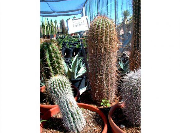 Whole Foods North Las Vegas Nv