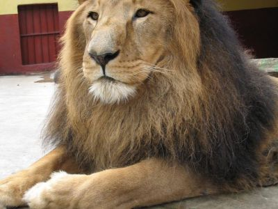 Lion Zoo Park, Addis Ababa