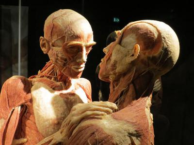 BODY WORLDS at People Museum, Berlin