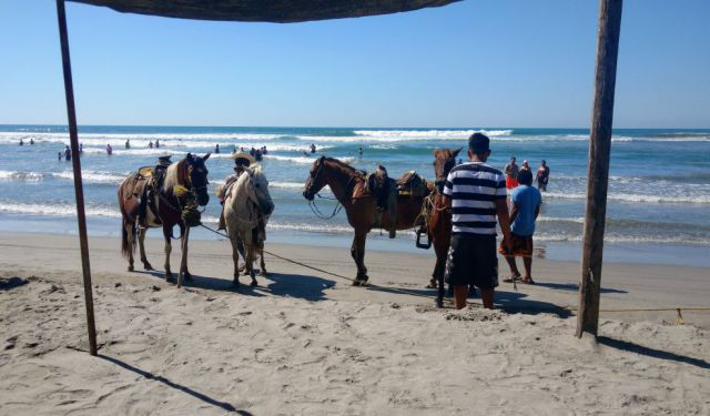 Acapulco Horseback Riding and Baby Turtle Release
